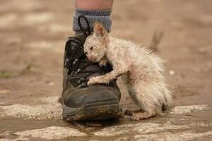 ботинок-и-котенок